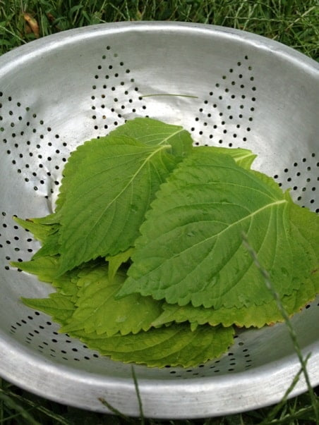 Perilla Leaves