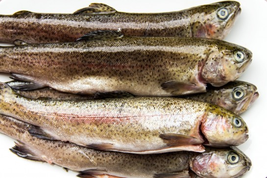 Fresh Raw Trout