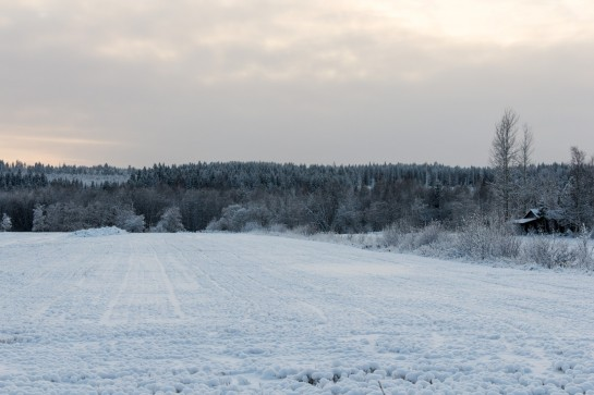 Swedish Countryside - Snowy fields