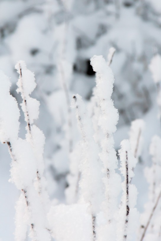 Swedish Countryside - Snow covered grasses