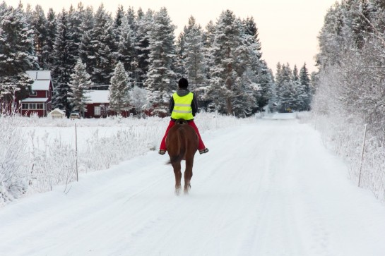 Swedish Countryside - Horse and rider in the snow
