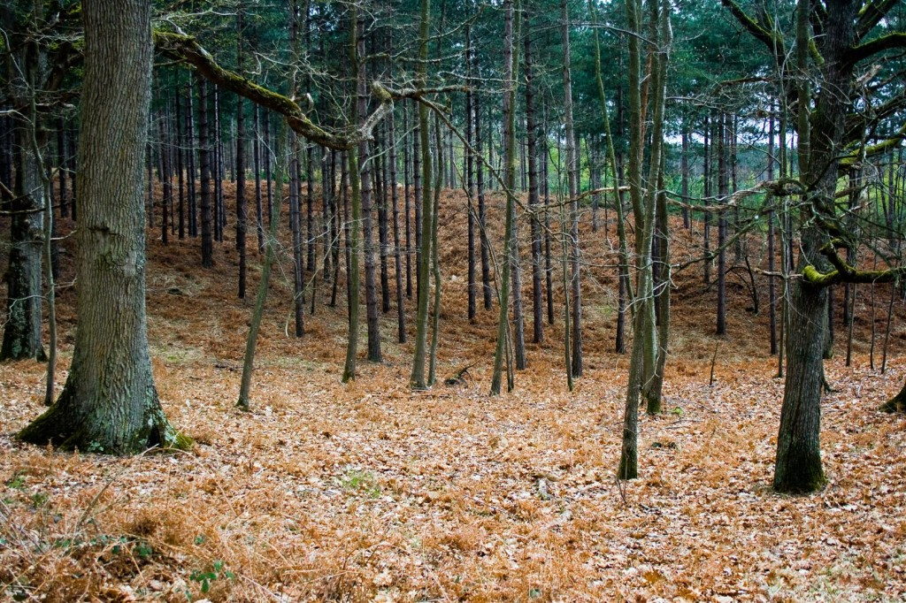 Rambouillet Forest